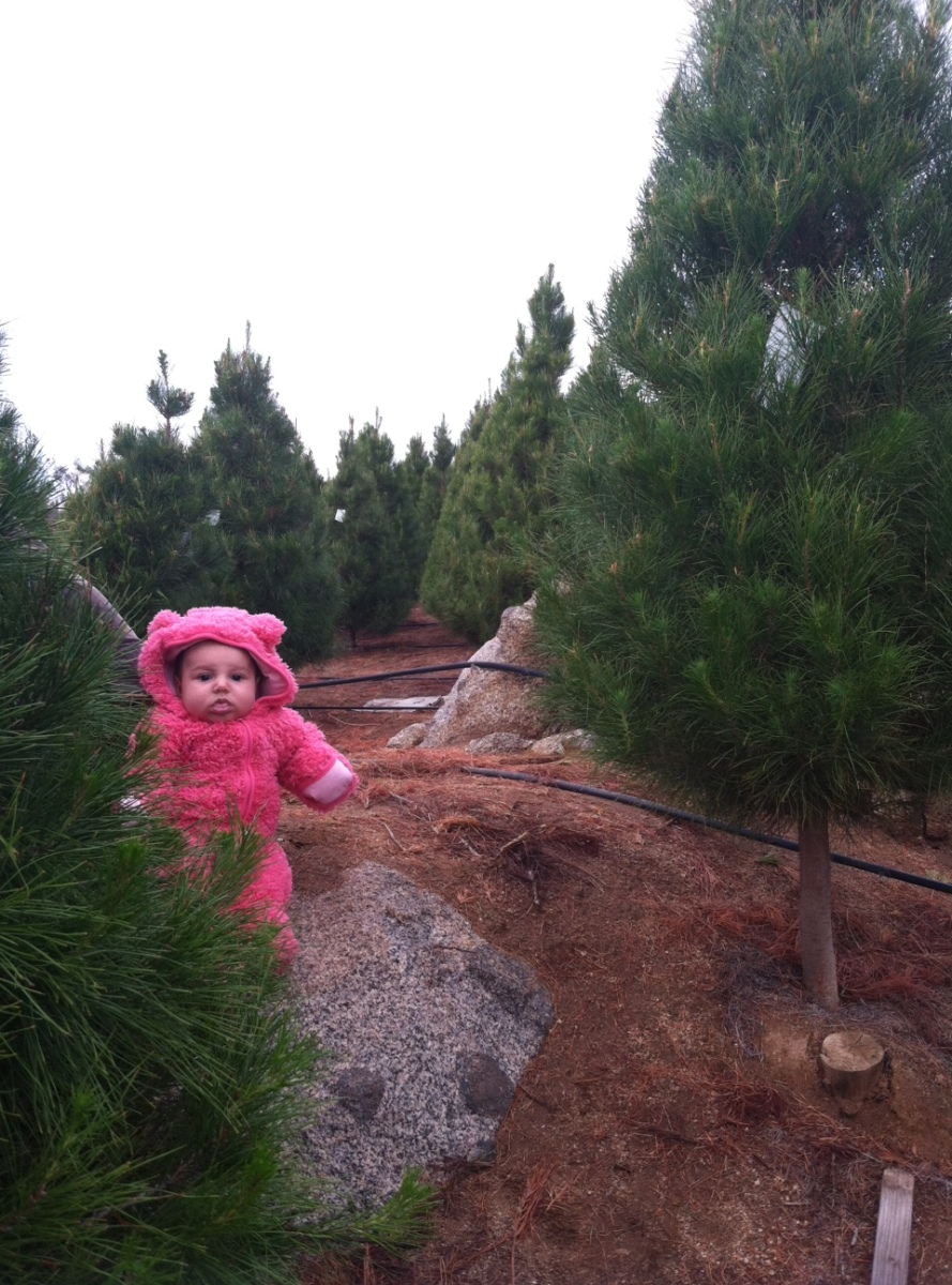Mysterious Bear Species Sighted at Local Christmas Tree ...